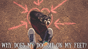 Why Does My Dog Sit On My Feet?