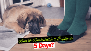 How to Housebreak a Puppy in 5 Days?