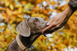 7 Signs That Show a Dog Trusts You.