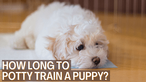 How Long to Potty Train a Puppy?